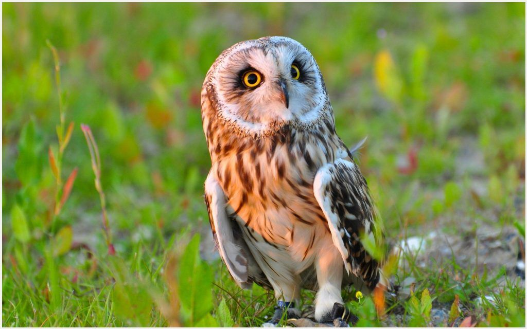 Cute Owl Bird Wallpaper cute owl bird wallpaper 1080p