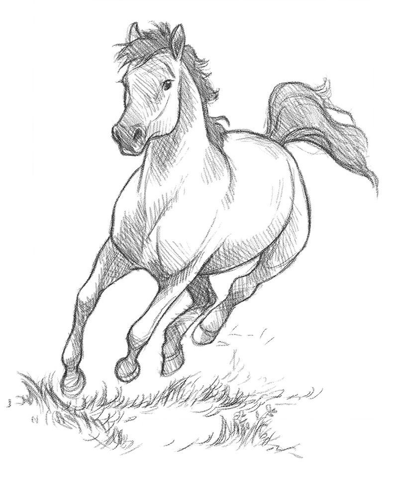 Trying Out Digital Pencils Horse Art Drawing Animal Drawings Animal Drawings Sketches