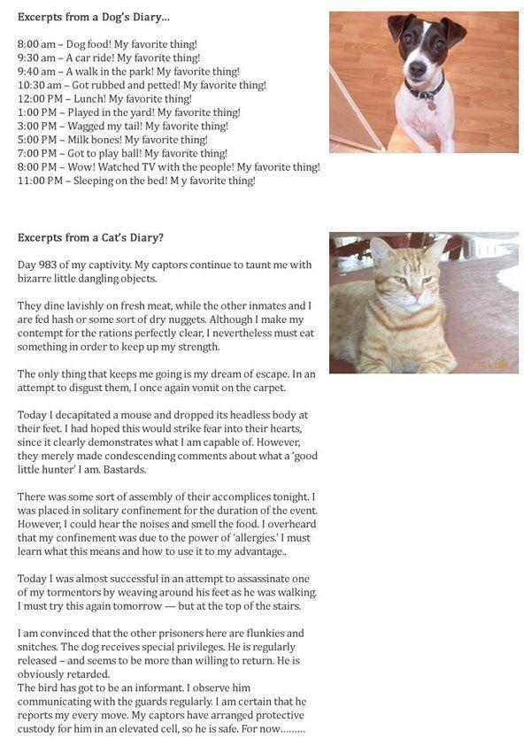 Dog vs Cat Diary.