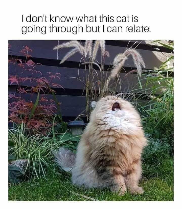 Latest Funny Imagenes TOP 75 Funny Cats Memes TOP 75 Funny Cats Memes 6