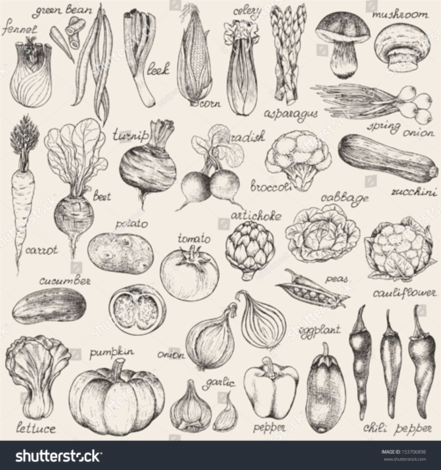 Collection Of Hand Drawn Vegetables Vector Illustration In Vintage Style Illustration How To Draw Hands Vintage Illustration