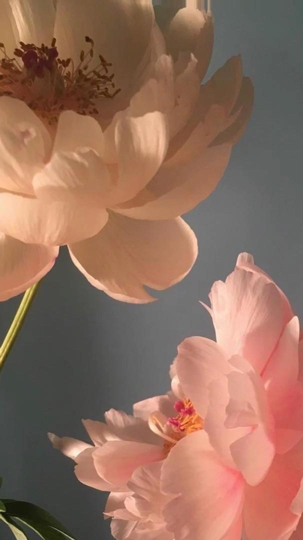 FLOWER LIVE WALLPAPER