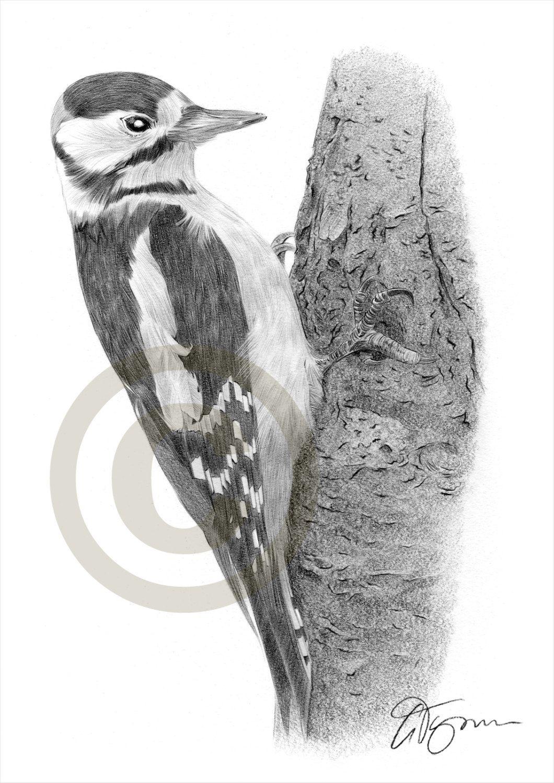 Specht Grosse Spotted Vogelkunst Bleistift Zeichnung Etsy Bleistiftzeichnung Zeichnung Ideen Bleistift Vogel Kunst