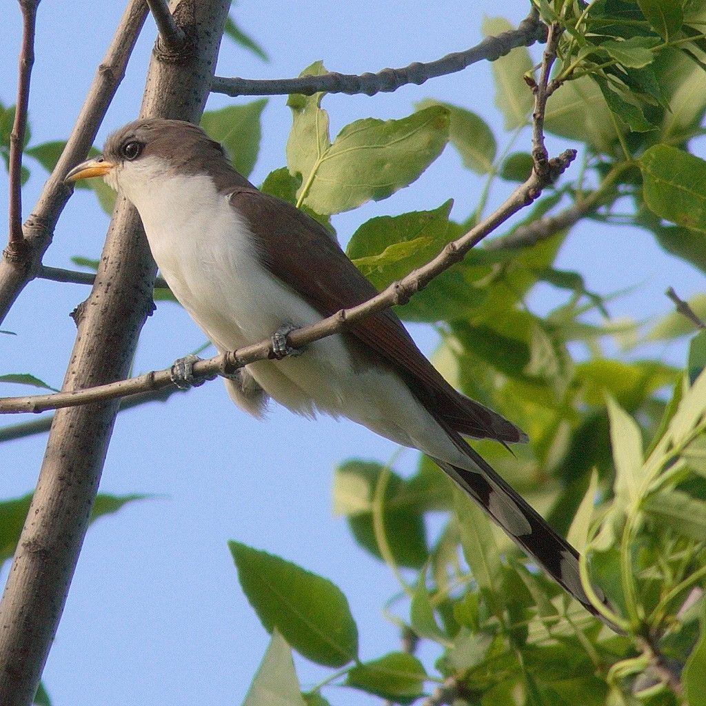 Pin Von Patches O Houlihan Auf Tiere Seltene Vogel Vogel Fur Kinder Seen