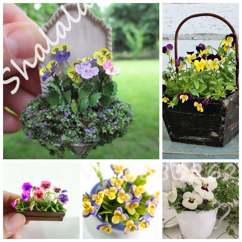Indoor Fingertip Bonsai Seeds 10 Pcs Mini Pansy Flower Seeds Potted Plant Mini Greenhouse Planting Variety Of Colors Sell Well Bonsai Seeds Garden Supplies Flower Seeds