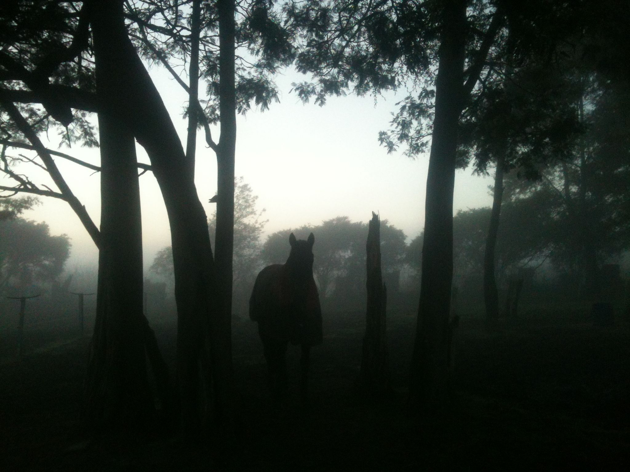 The race horses awaken through the fog of the early, cold morning.