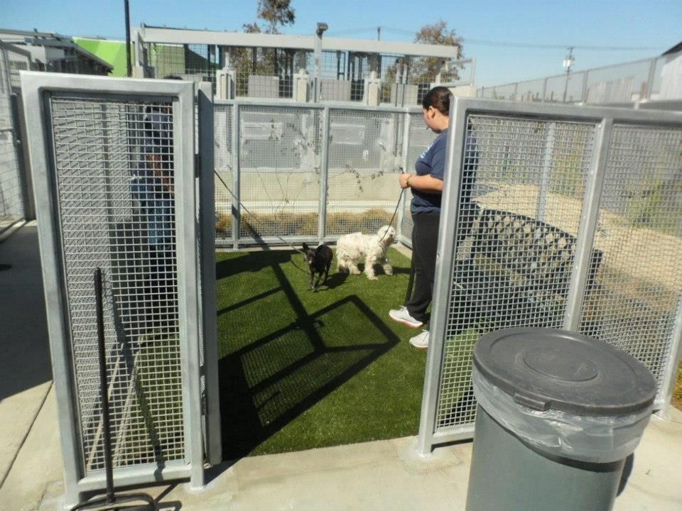 The South LA Animal Shelter just reopened it's doors! It