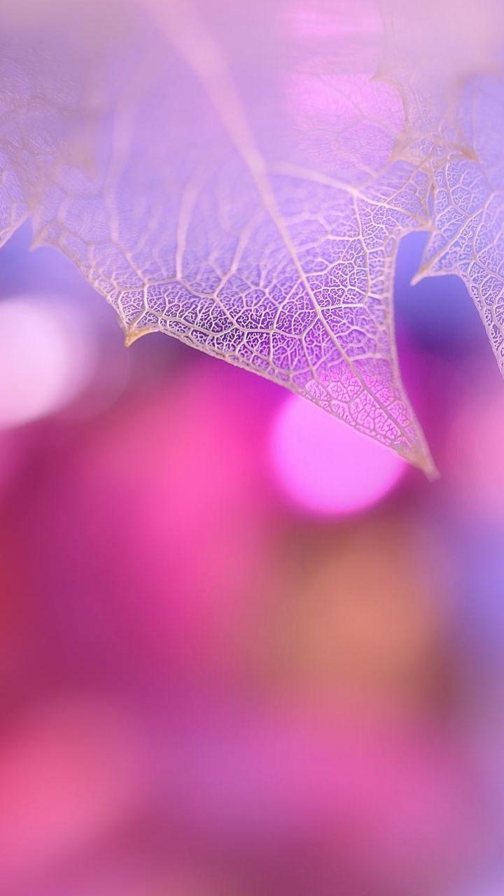 720x1280 Wallpaper Leaf Macro Pink Plant Best Iphone