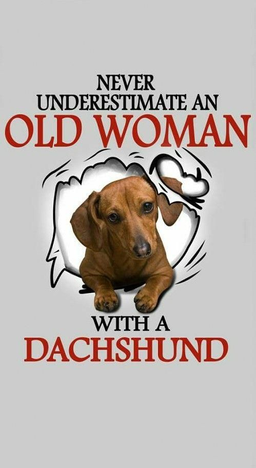 Things We All Respect About The Friendly Daschund Dogs