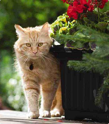 Cat Urinary Health Urinary Health Cats Pet Insurance Cost