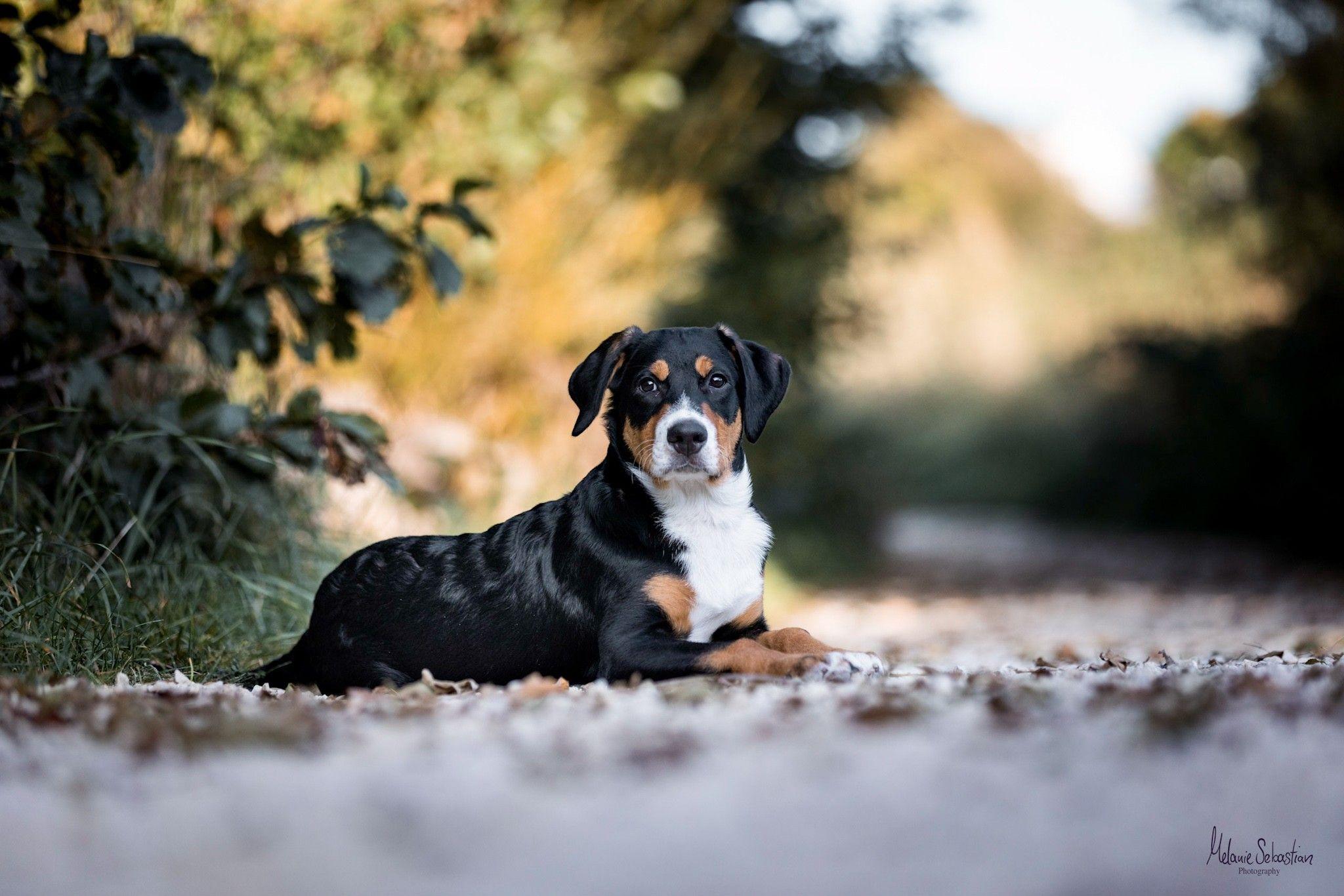 Hundefotograf Bayern Hundebilder Machen Professionelle Hundefotos Shooting Mit Hund Hundefotos Hundeliebe Grosse H Schwarze Hunde Hunde Hunde Welpen