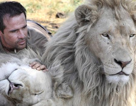 How can anyone kill this magnificent animal!  the lion whisperer 2