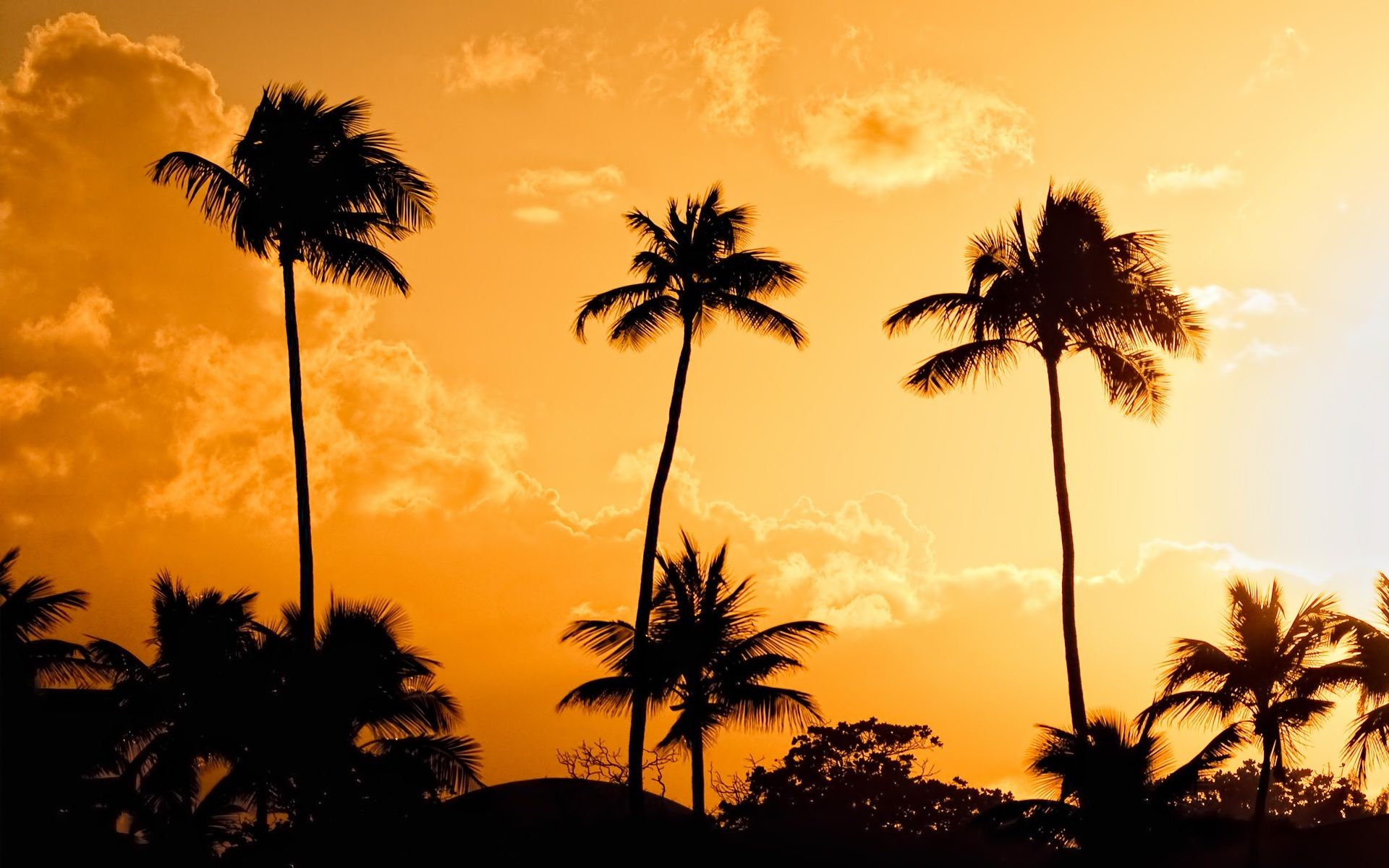 Full HD p Palm trees Wallpapers HD Desktop Backgrounds