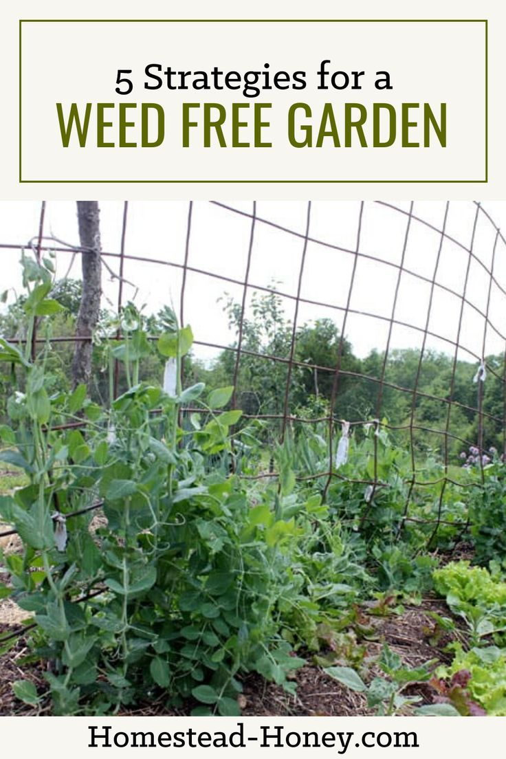 5 Strategies for a Weed Free Garden is part of Garden planning, Veggie garden, Windowsill garden, Garden pests, Garden, Backyard garden - Tired of spending all of your gardening time battling weeds  Try my five simple strategies for a weed free garden and enjoy beauty and abundance instead!