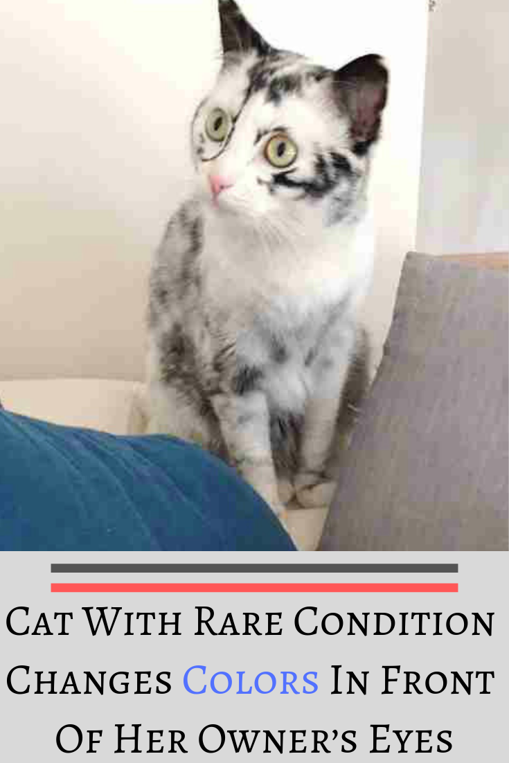 Cat With Rare Condition Changes Colors In Front Of Her