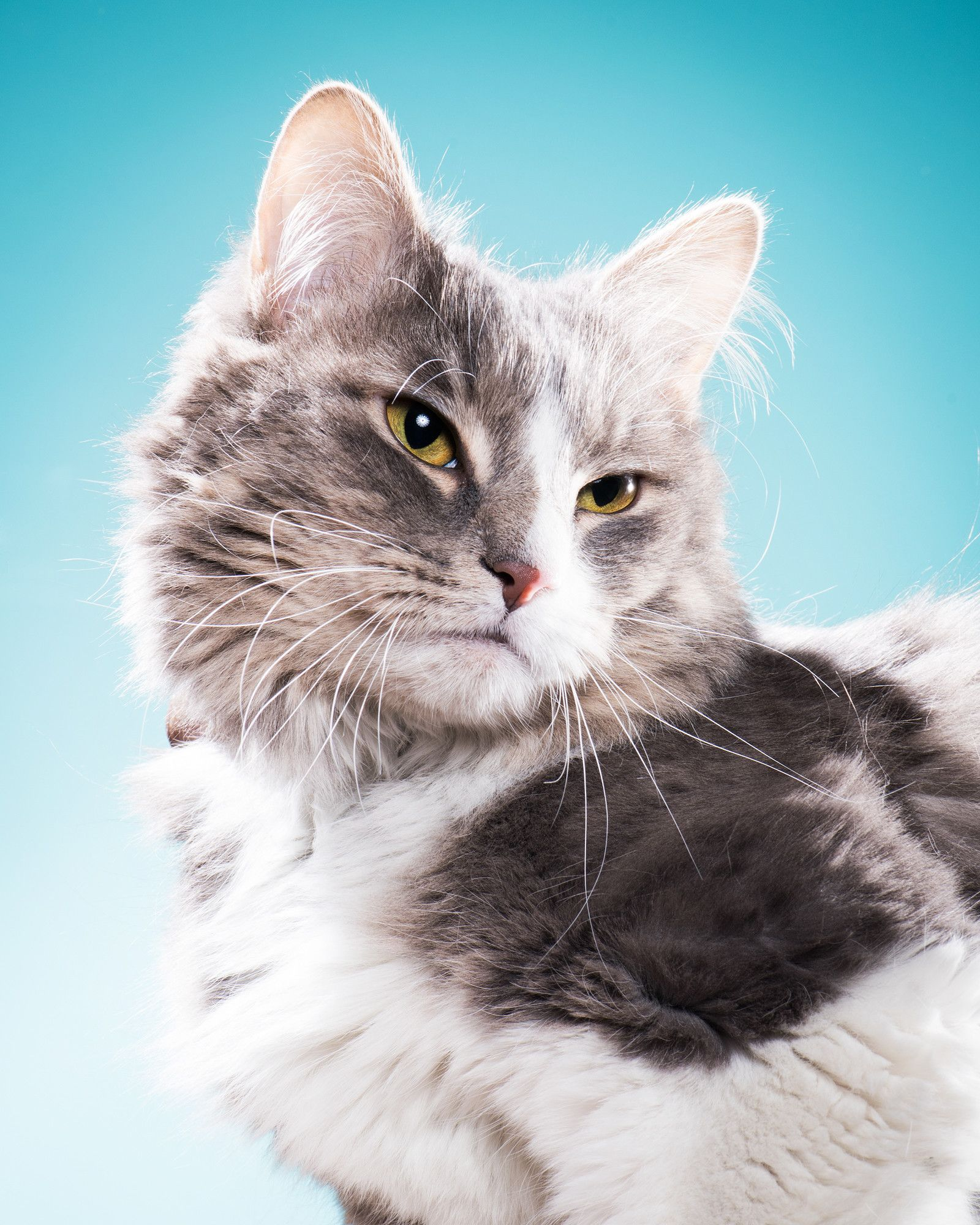 24 Adorable AF Pets You Can Adopt Right Now! Pretty cats