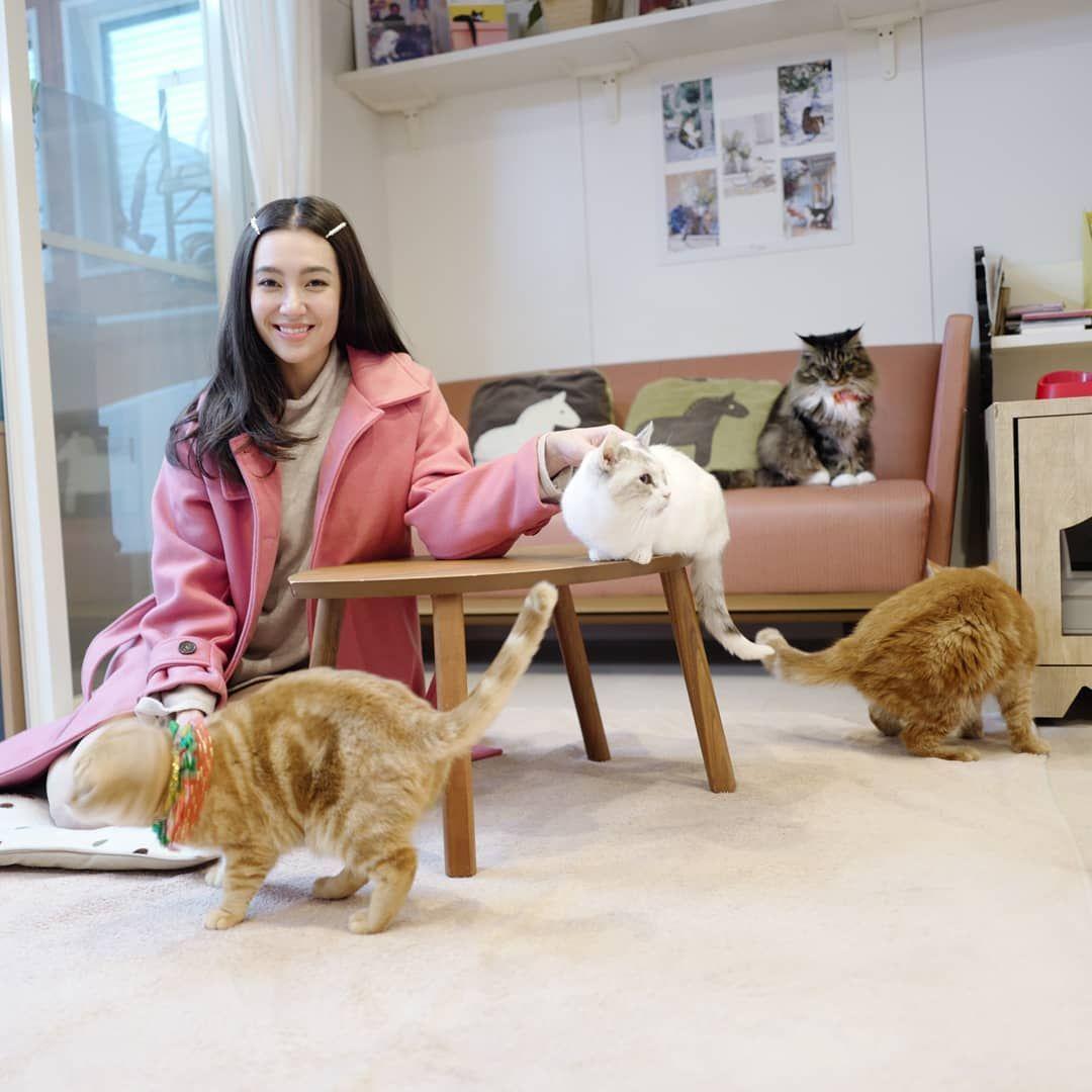 ถ กใจ 134 7k คน ความค ดเห น 237 รายการ Bella Ranee Campen Bellacampen บน Instagram คาเฟ แมวท แรกของ Osaka ทาสแมวท แท เป ดม ป อม เส อผ า ความค ดเห น