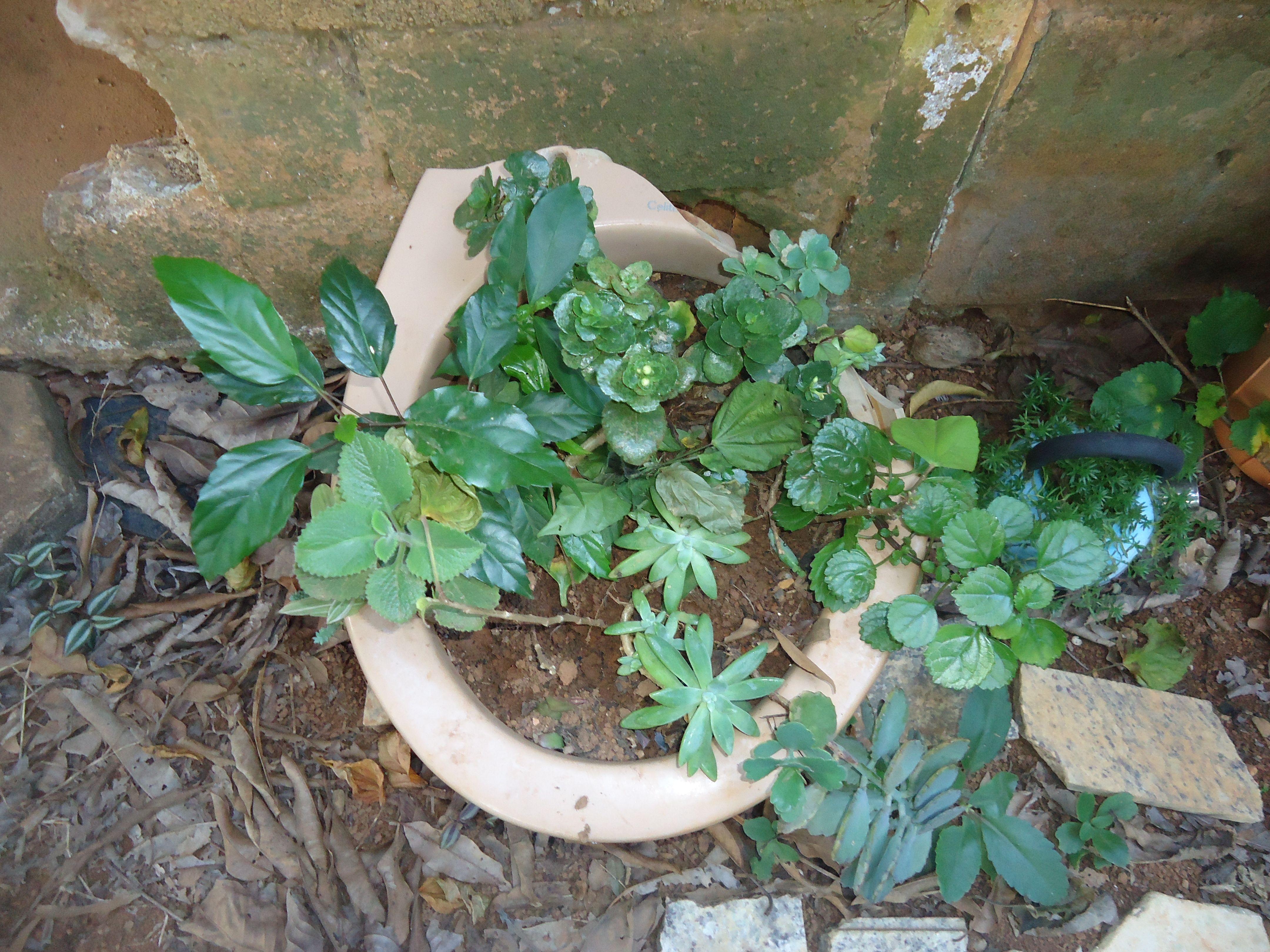 berçario das plantas