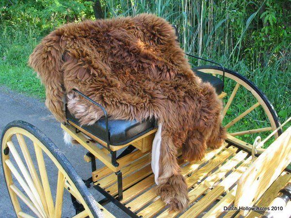 Alpaca Blanket