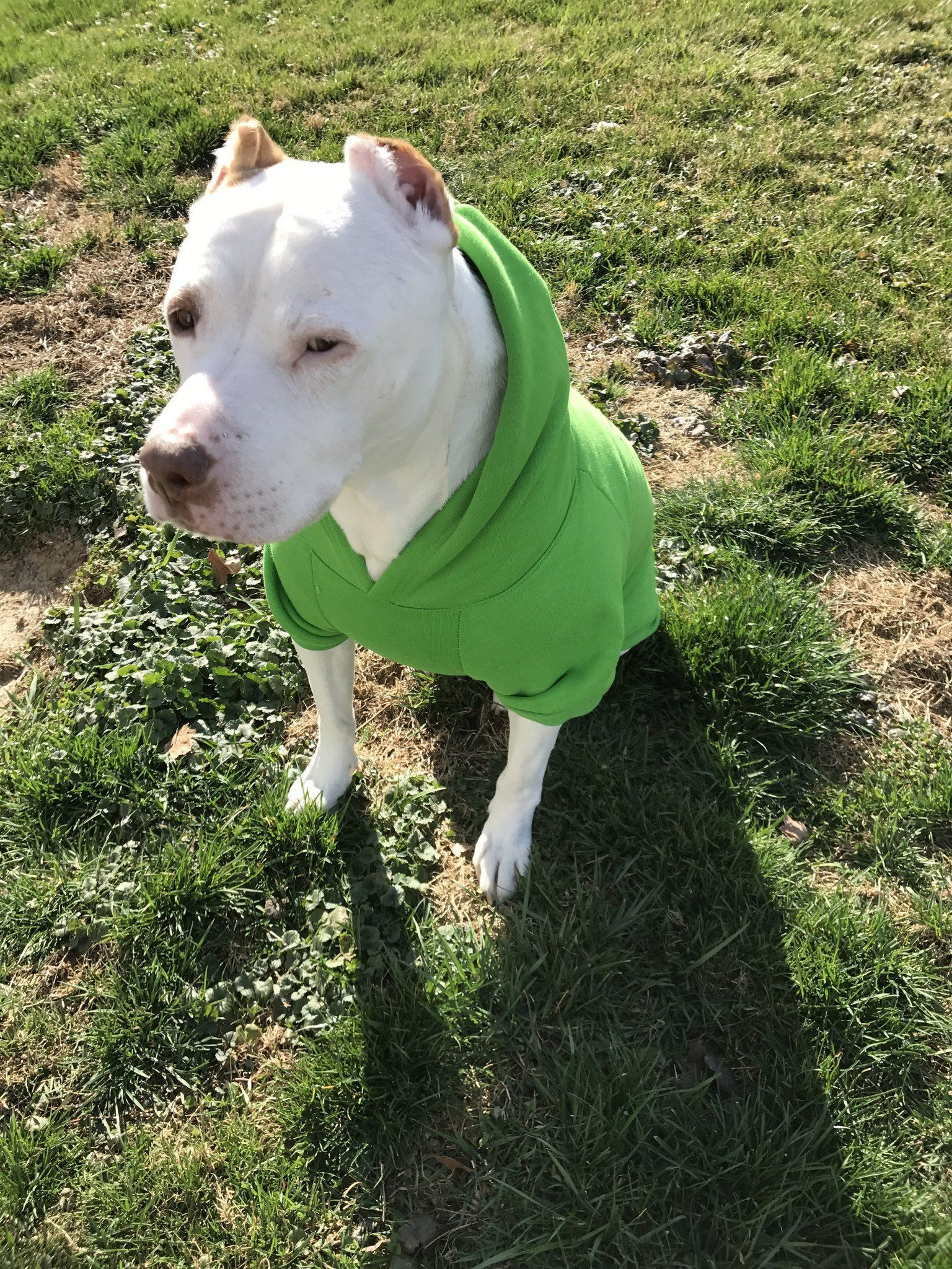 Who Rescued Who Green Pitbull Dog Hoodie Really Cute Puppies