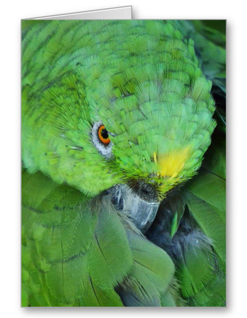 Green amazon parrot amazon parrot bird parrot