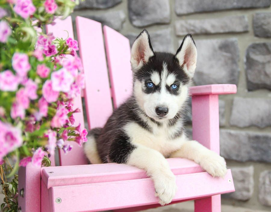 Are You Looking For A Bestfriend Or The Perfectpuppy To