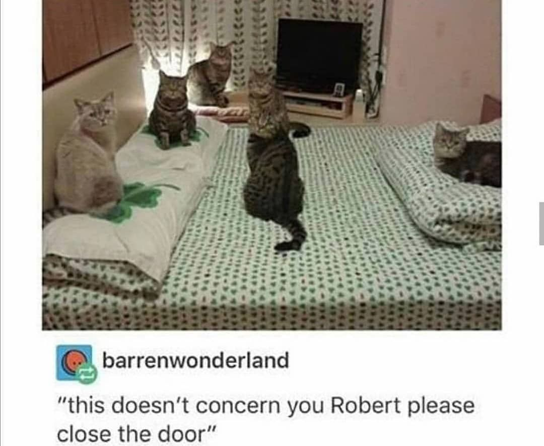 Catmemes Cat Cats Wholesome Kitten Catmeme Sadcat Sadcats Kittens Animals Animal Meme Memes Sadc In 2020 Funny Animal Jokes Funny Dog Pictures Funny Cats
