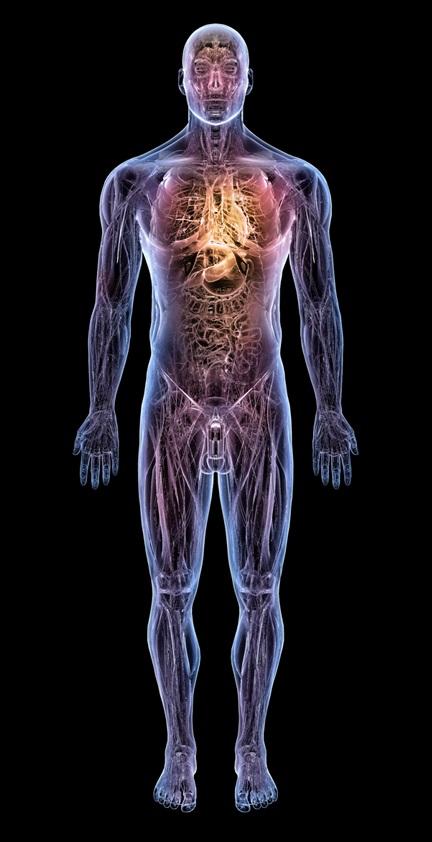Medical Visualization Rih 3d Lab Filipino Martial Arts Human Anatomy 3d Martial Arts