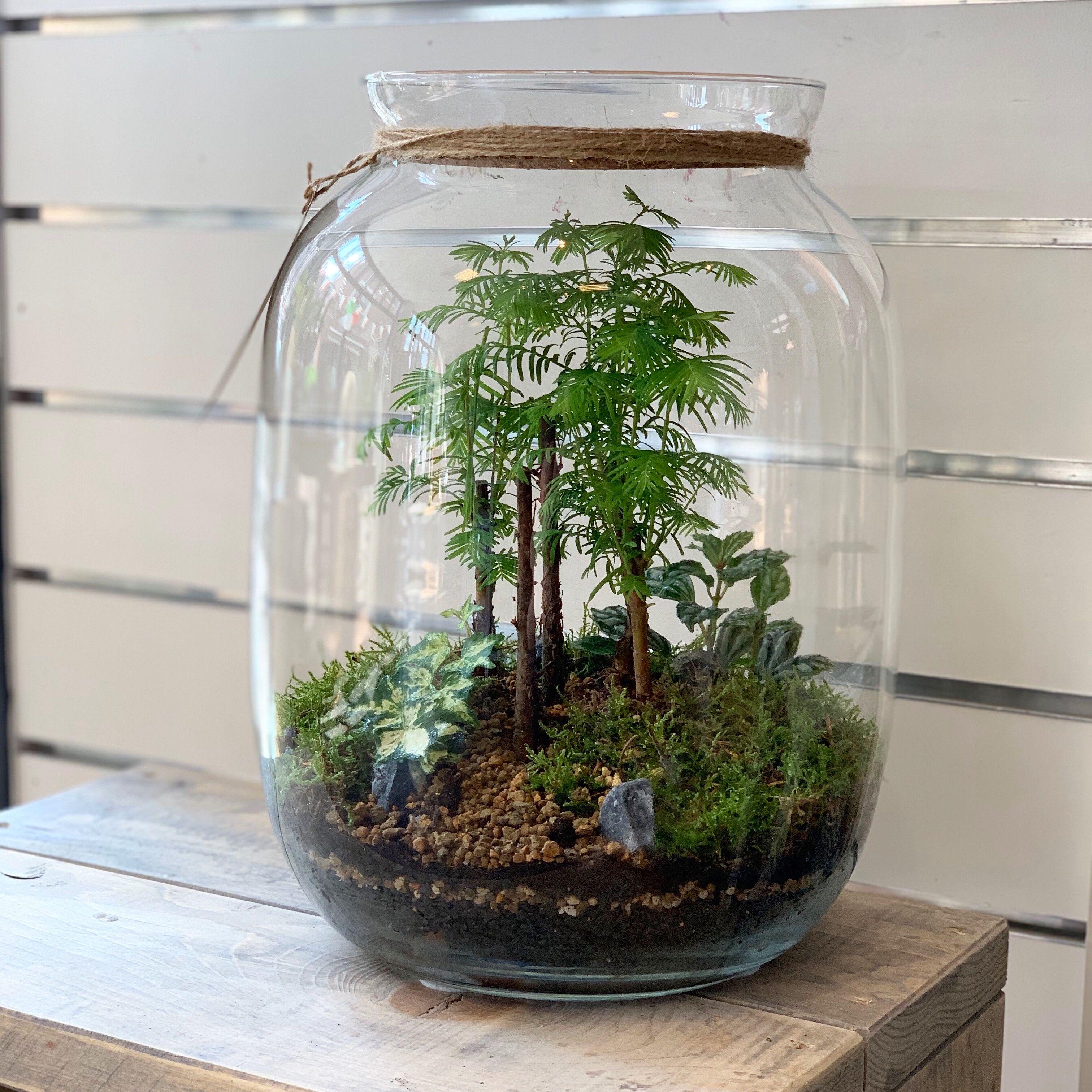 Pin On Gardening Under Glass