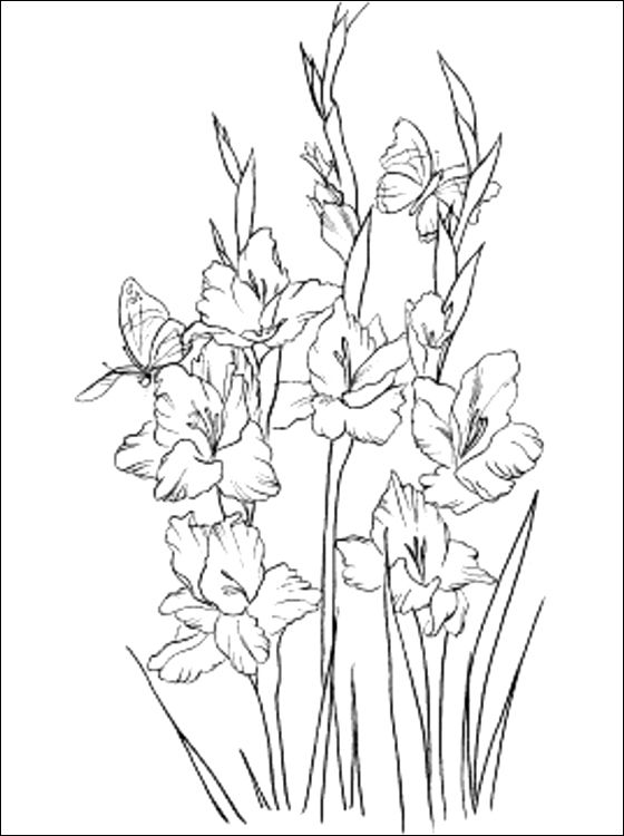 Gladiolus coloring page to print out | Coloring pages ...