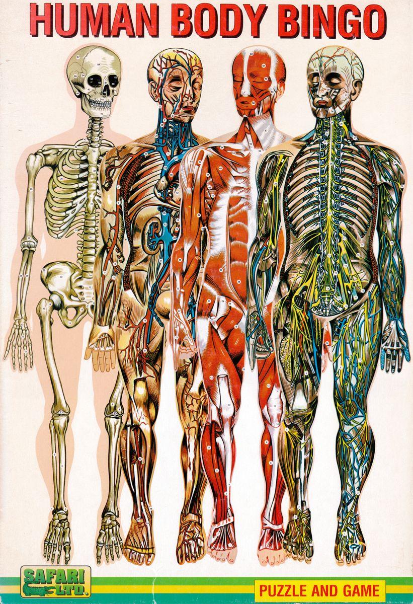 Anatomy Games Memento Mori Pinterest Human Body Anatomy