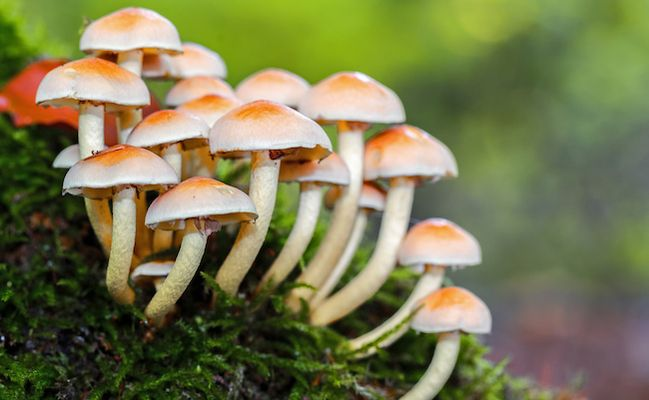 7 Reasons Mushrooms Could Save the World | Stuffed mushrooms, Can ...