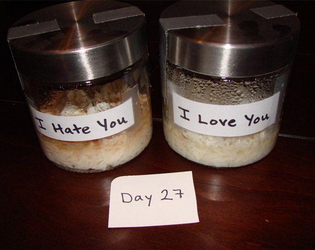 Dr Emoto rice experiment