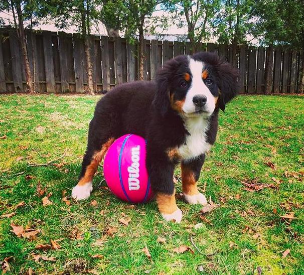 Most Inspiring Australia Chubby Adorable Dog - 95b61aab09e1693926ae33d3c550f5d5  Snapshot_103319  .png