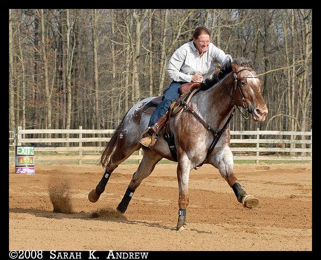 Garden State Barrel Racing Barrels, Horse and Rodeo life