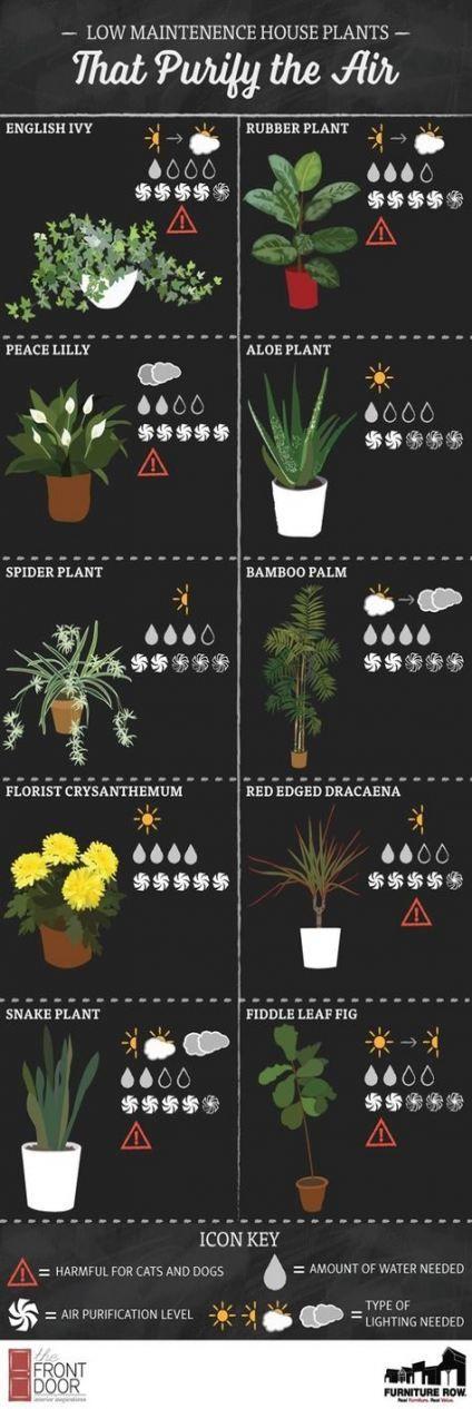 61  Ideas for apartment plants balcony cactus -   15 plants Balcony house ideas