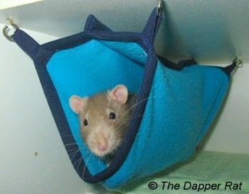 Medium image of the dapper rat   awesome and cheap rat hammocks