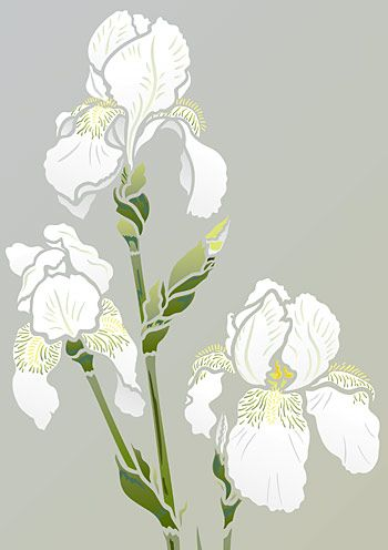 Iris Stencil 2 Henny Donovan Motif Iris Drawing Iris Art Flower Stencil