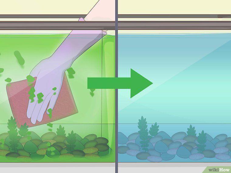 Cómo Limpiar Un Acuario Con Imágenes Peces De Agua Dulce Para Acuario Peces De Acuario Peces De Agua Salada