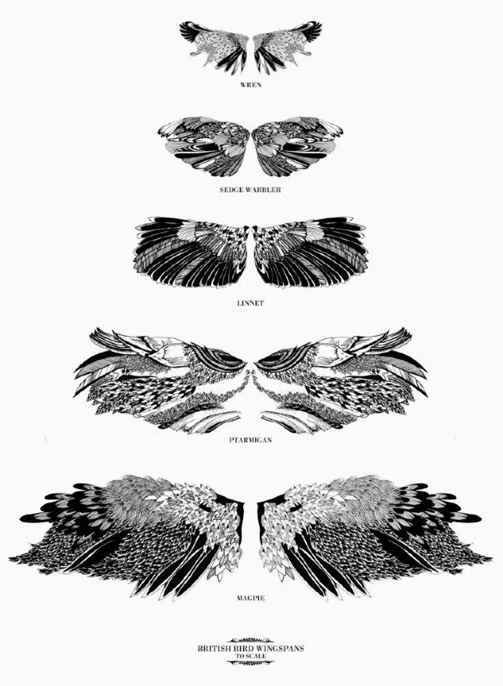 Zoologie et illustration