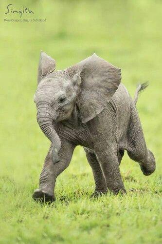 Pin Von Julie Flynn Auf Felting Niedliche Tiere Susse Tiere Niedliche Tierbabys