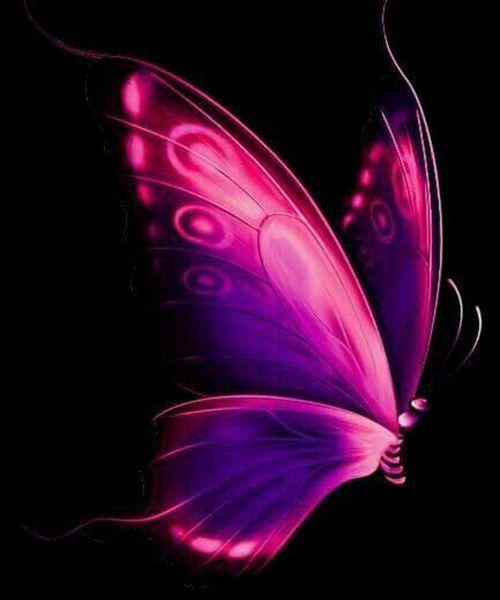 Photo of En Güzel Kelebek Resimleri – Dilek Mektubu