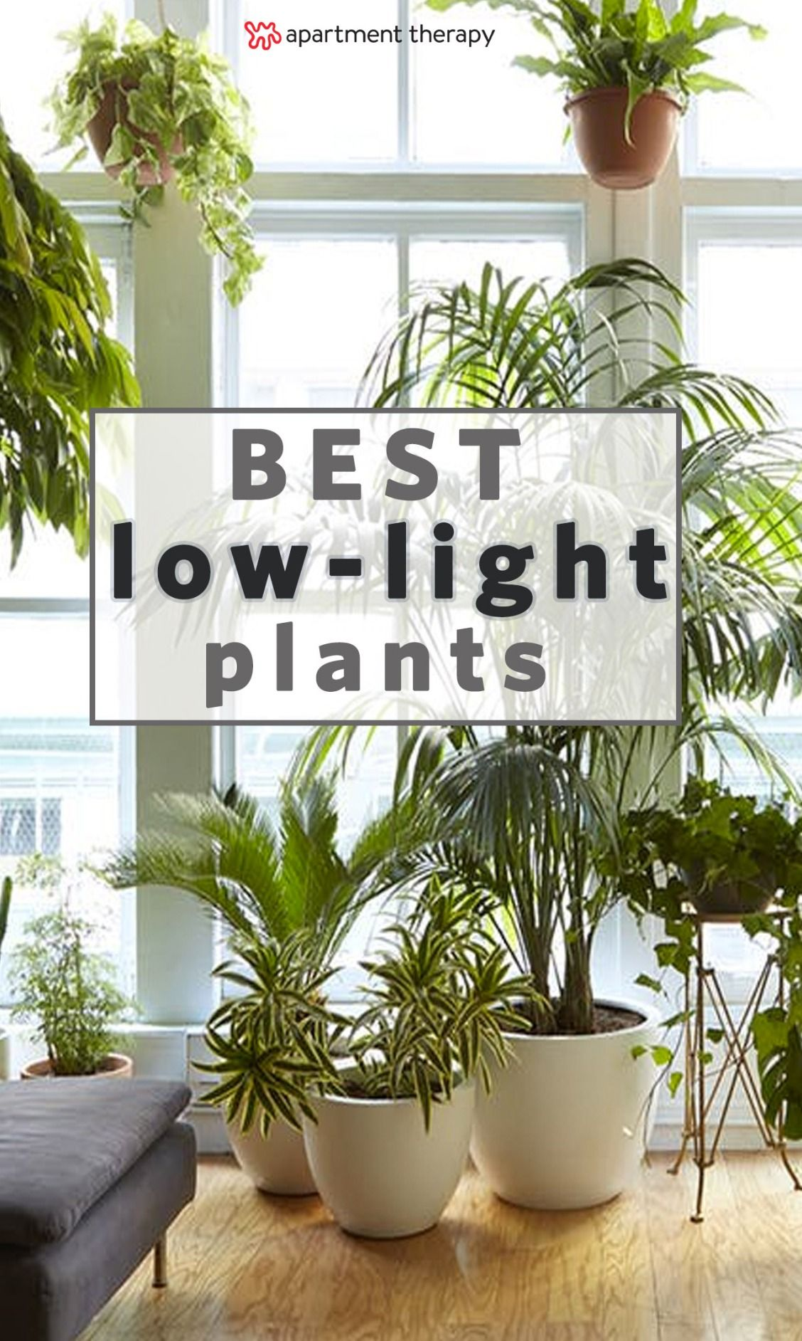 Grow light for houseplants - 8 Houseplants That Can Survive Urban Apartments Low Light And Under Watering