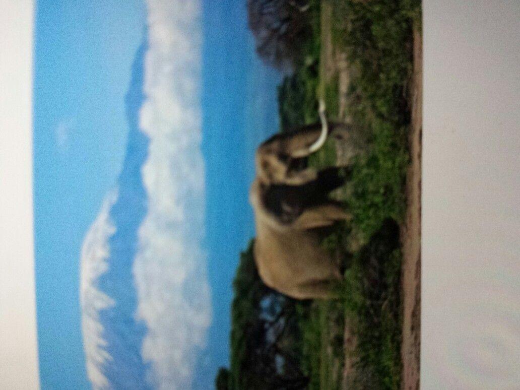 Love elephants ☺☺