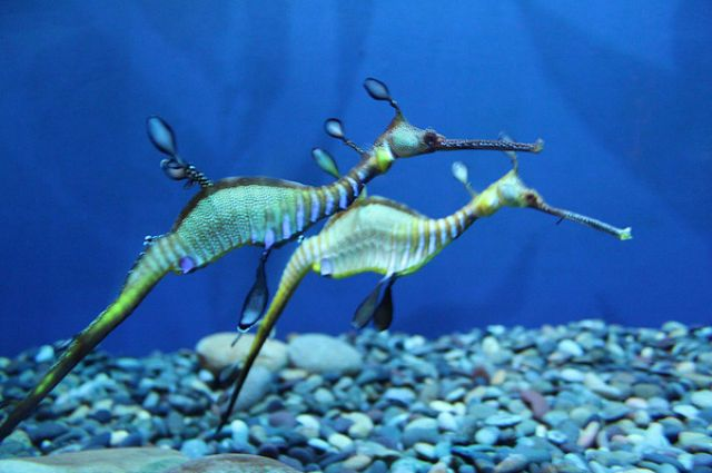 sea animals | ... creatures here are some of the most amazing creatures found underwater