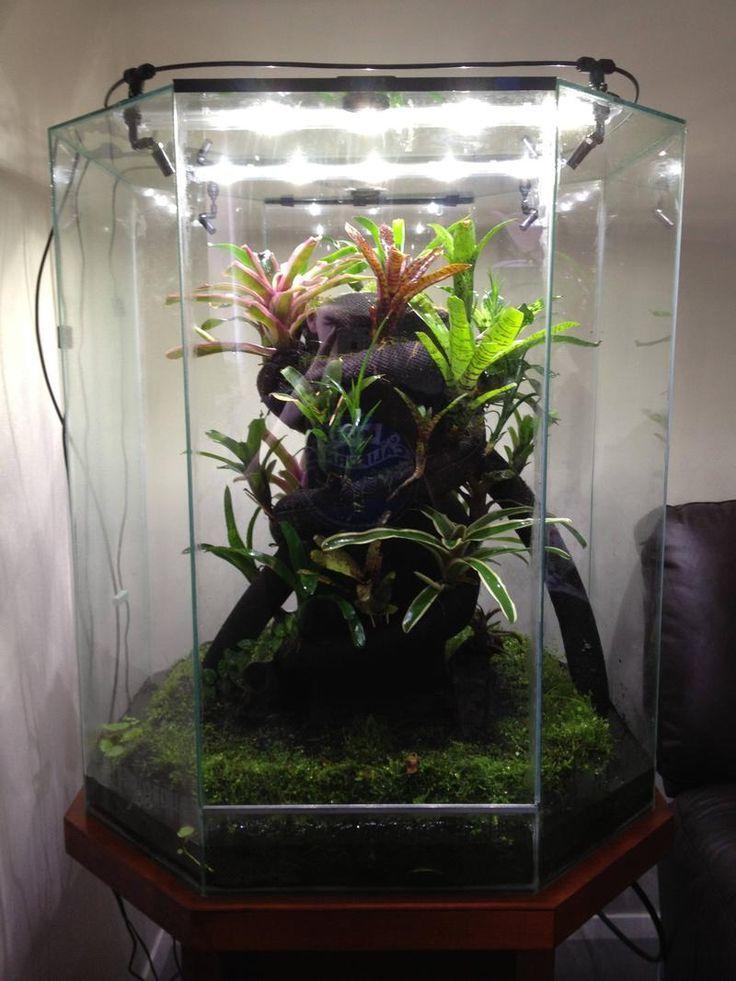 Pin By Fish On Future Pets Vivarium Chameleon Cage Reptile Tank