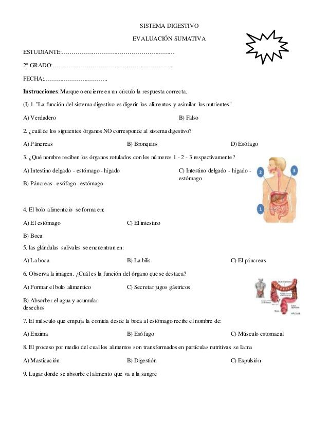 Contemporáneo Sistema Muscular Diagrama Friso - Anatomía de Las ...