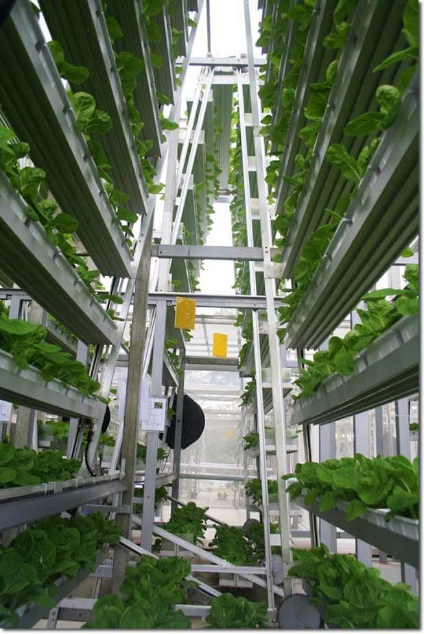 vertical farming solution to feed the local urban population