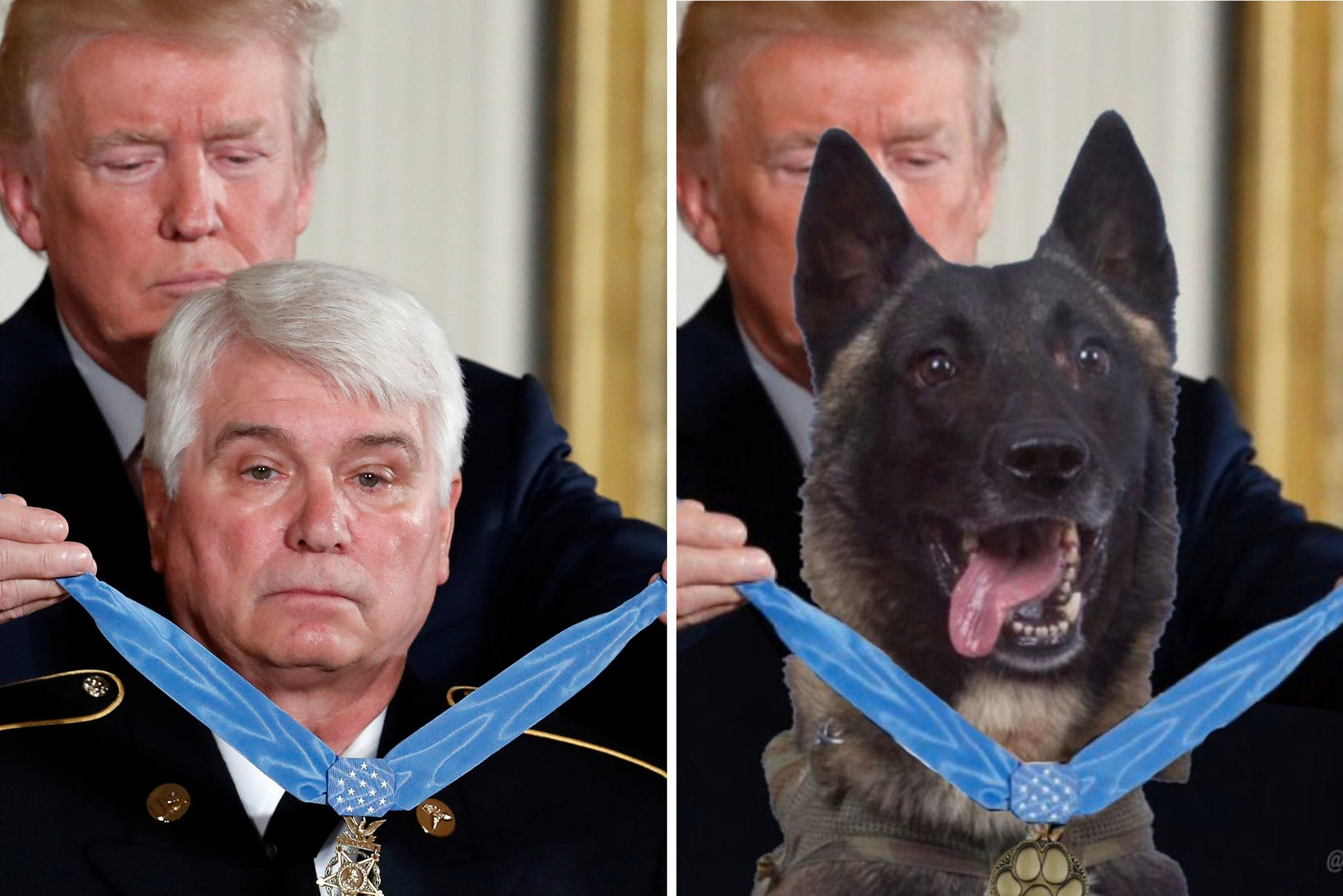 Trump Tweets Faked Photo Of Hero Dog Getting A Medal Fake Photo Lap Dogs Hero