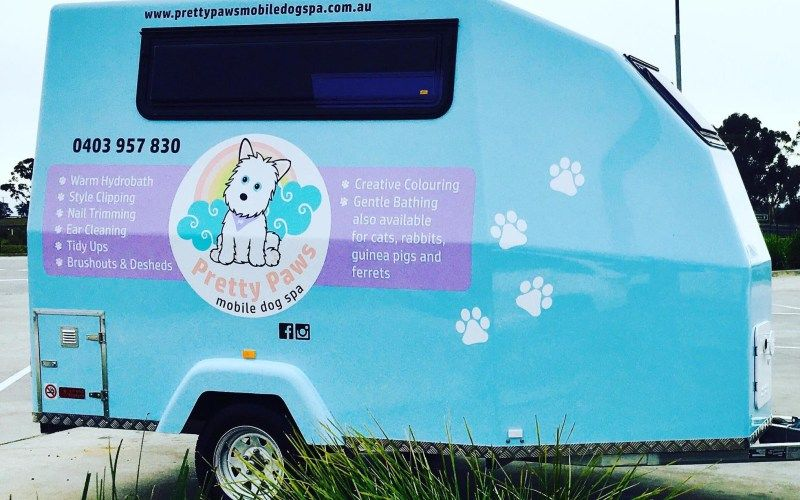 Care And Advice For Senior Pets Dog Grooming Dog Clippers Dog Spa